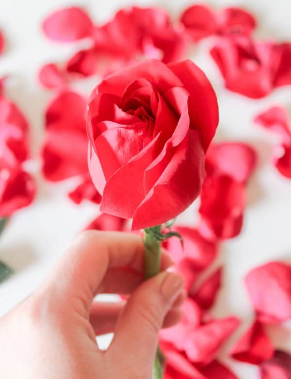 easy love spells with rose petals