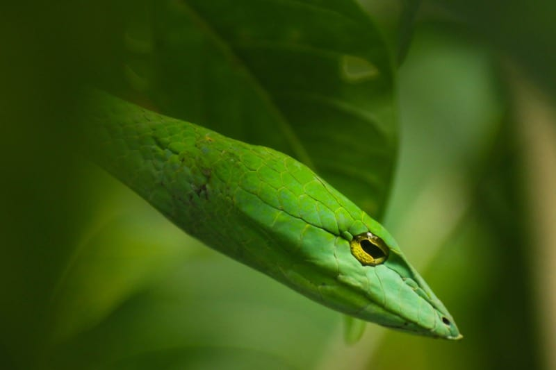 dream about green snakes
