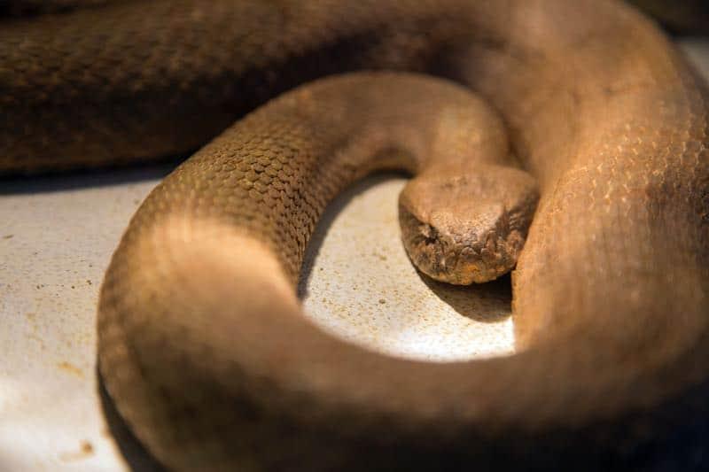 dreaming of killing a snake