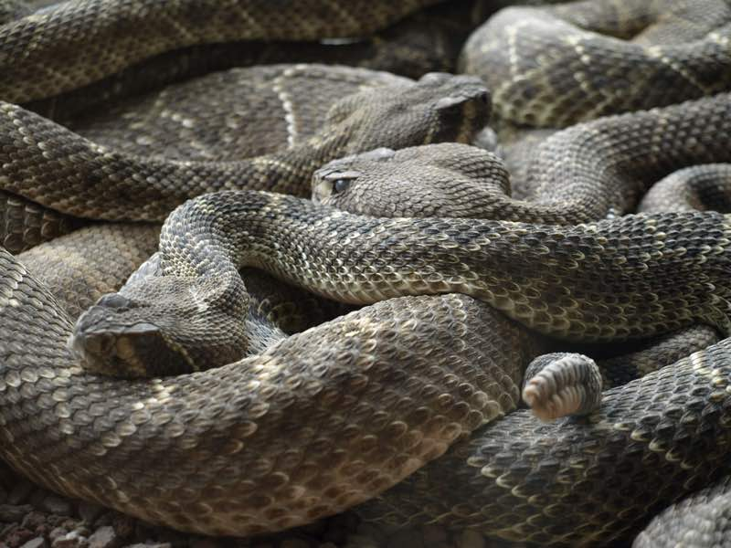 lots of snakes in dream